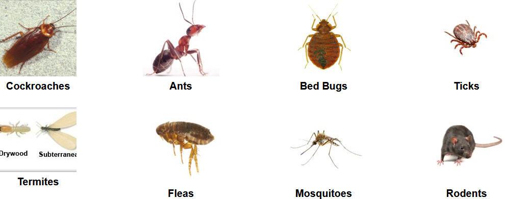 pest control conway ar